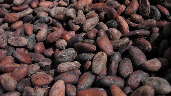 All sjokolade kan være borte om 30 år