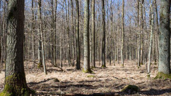 Mattilsynet bekymret over bruken av tremel