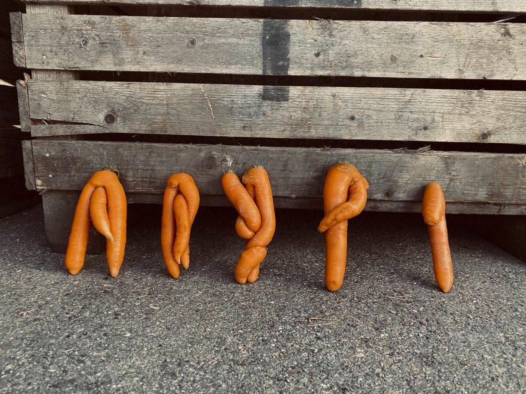 Slike gulrøtter kan ikke selges i dagligvarebutikken, men de kan brukes i pizzabunner og brød.